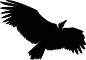 143 Fundos abutres_RV1-3