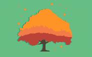 O valor da floresta