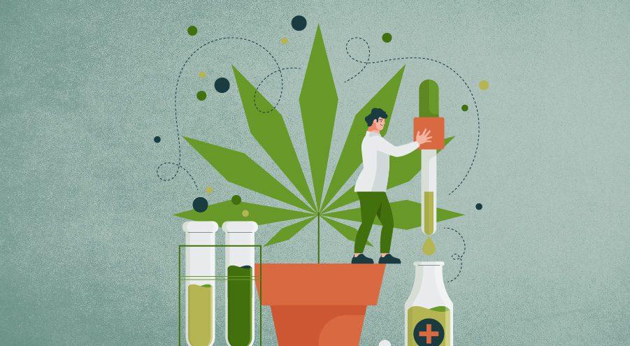 O futuro promissor da indústria de Cannabis